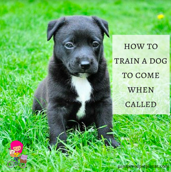 How to get your dog to come when called Dog behavior