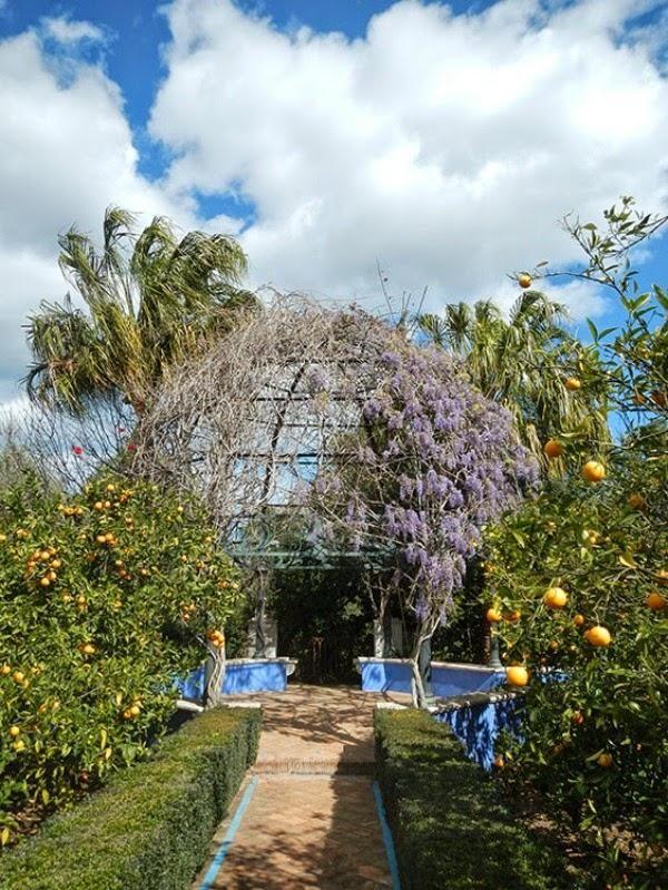 El jard n mediterr neo de l 39 albarda cuidar de tus for Plantas jardin mediterraneo