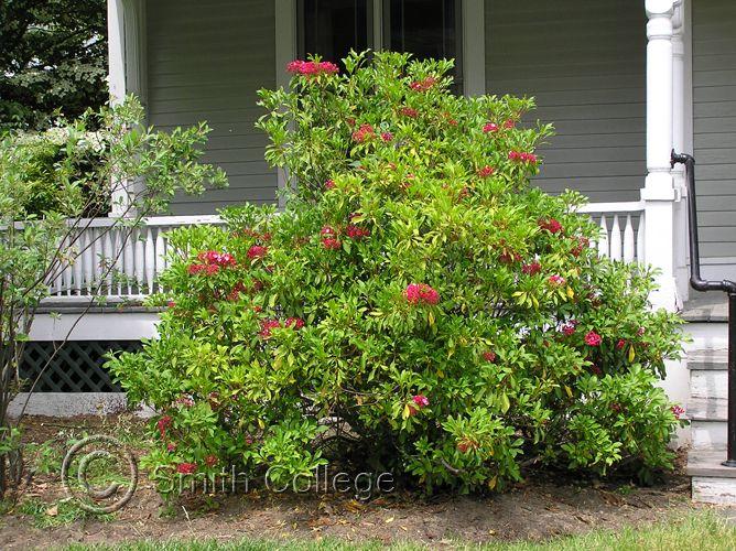 smith college botanic garden plant images cabin. Black Bedroom Furniture Sets. Home Design Ideas