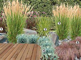 magazine petit jardin n 88 fevrier 2014 jardinage plantes et fleurs paddon pinterest. Black Bedroom Furniture Sets. Home Design Ideas