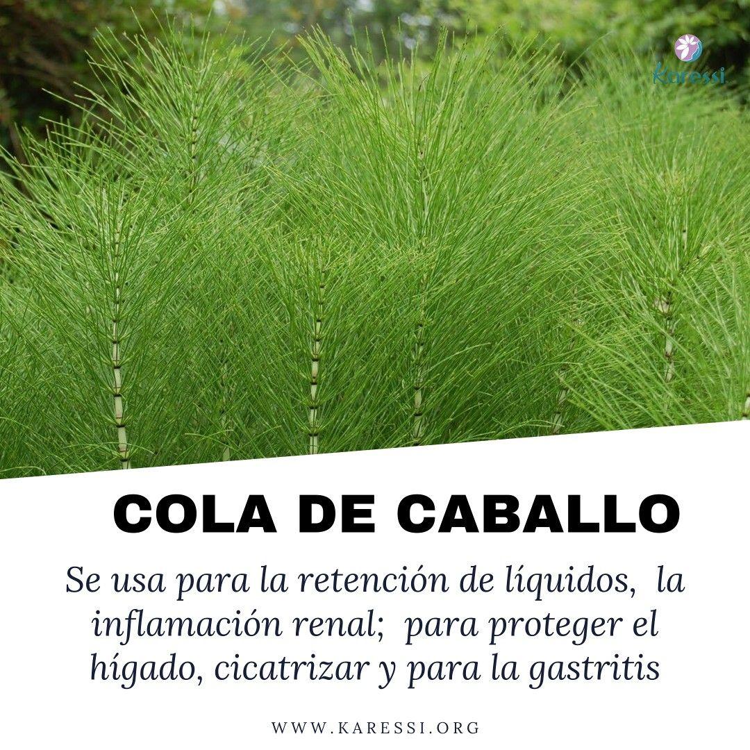 Beneficios De La Cola De Caballo Herbolaria Mercado Mexico Retencion De Liquidos