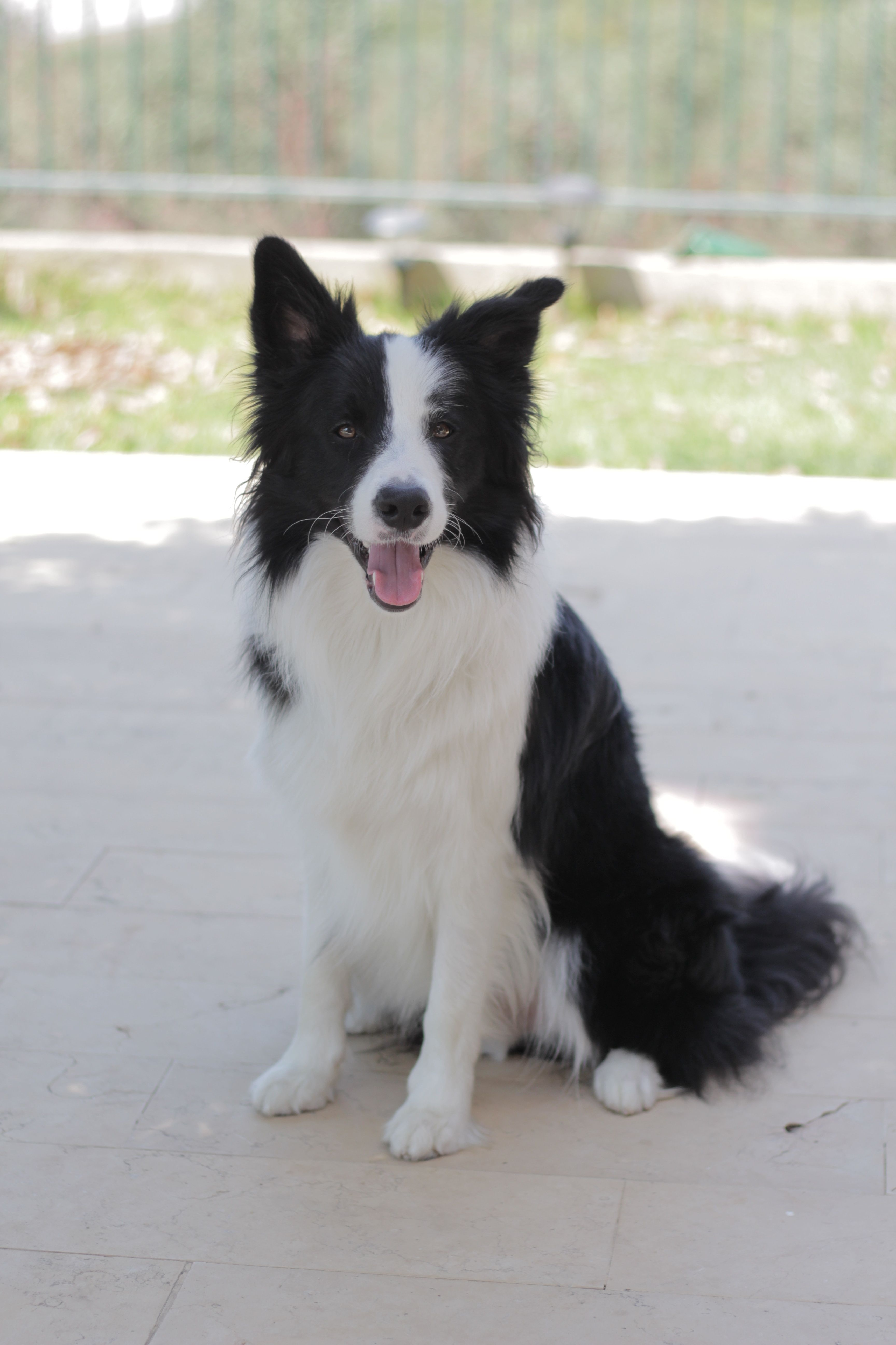 The Lighter Side Of Border Collies Homesteading And Livestock