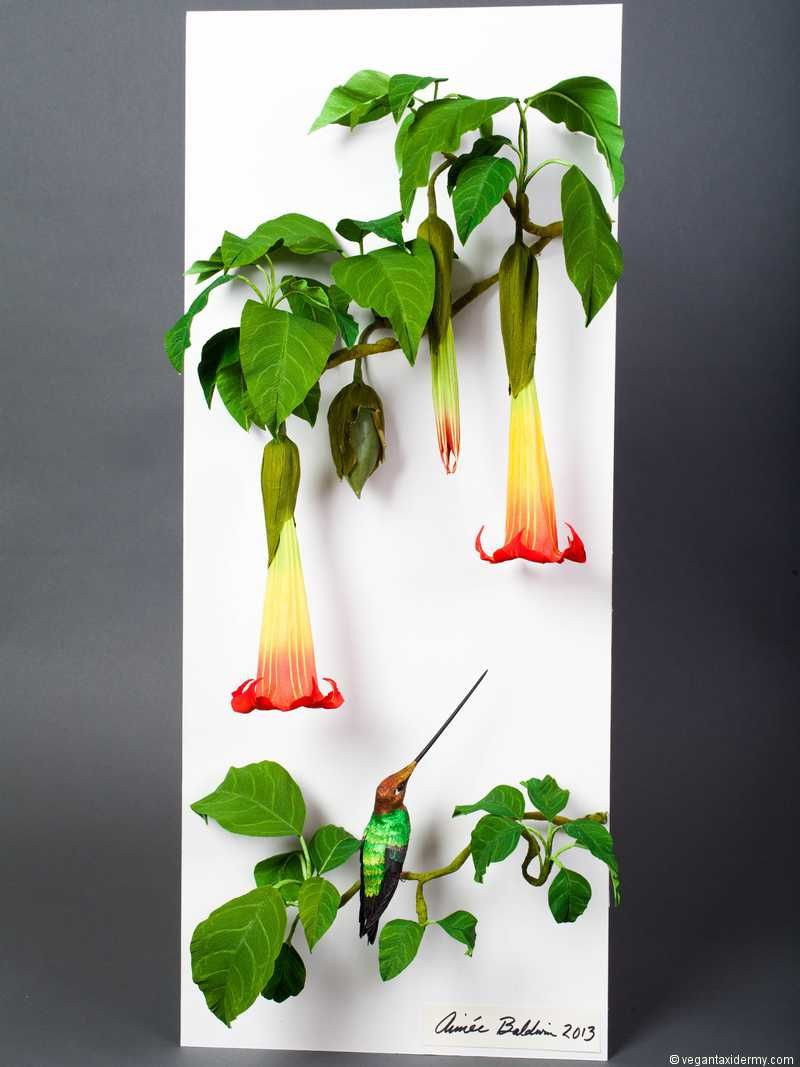 Red Angel's Trumpet (Brugmansia sanguinea), 3D crepe