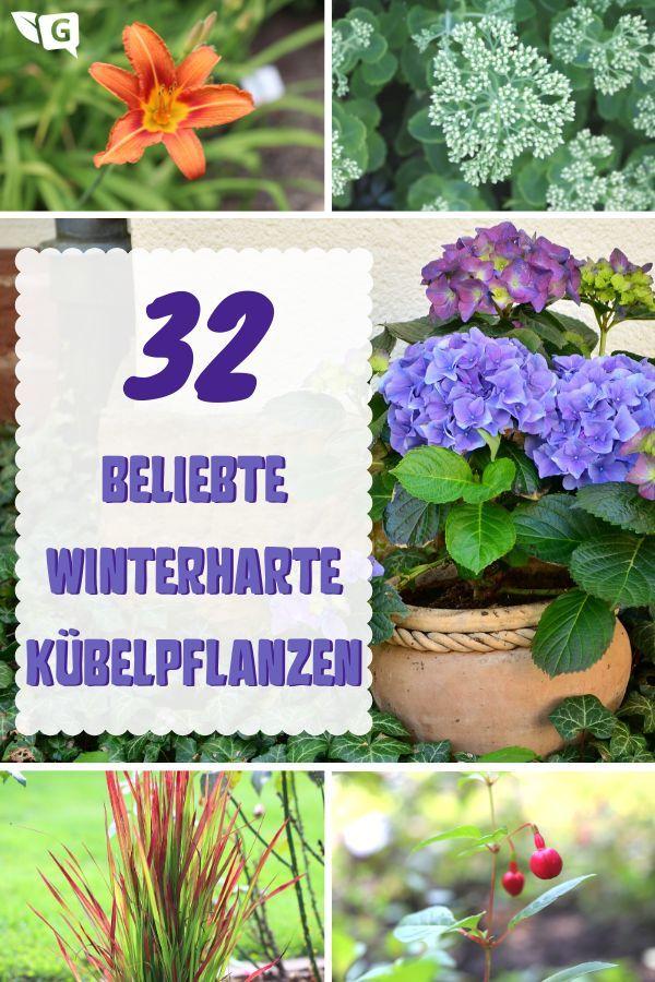 Beliebte winterharte Kübelpflanzen - Gartendialog.de