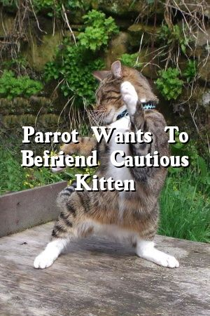 Diana Mills Tells About Parrot Wants To Befriend Cautious Kitten   #cats  #kitten  #world  #dogs  #cutecats  #Kittens  #catcondo  #Tabby