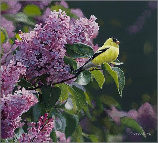 'Goldfinch and Lilac' Artist: Terry Isaac