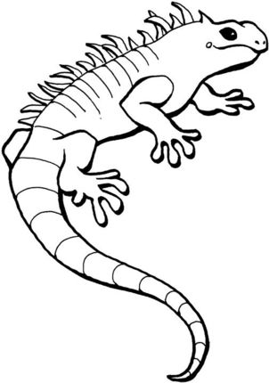 Iguana Coloring Page With Images Coloring Pages Snake