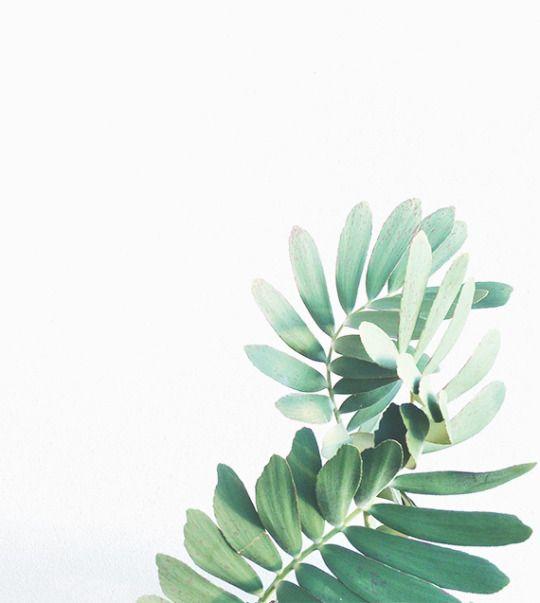 Green Desktop Wallpaper: Plants, Green Plants, Plant Art