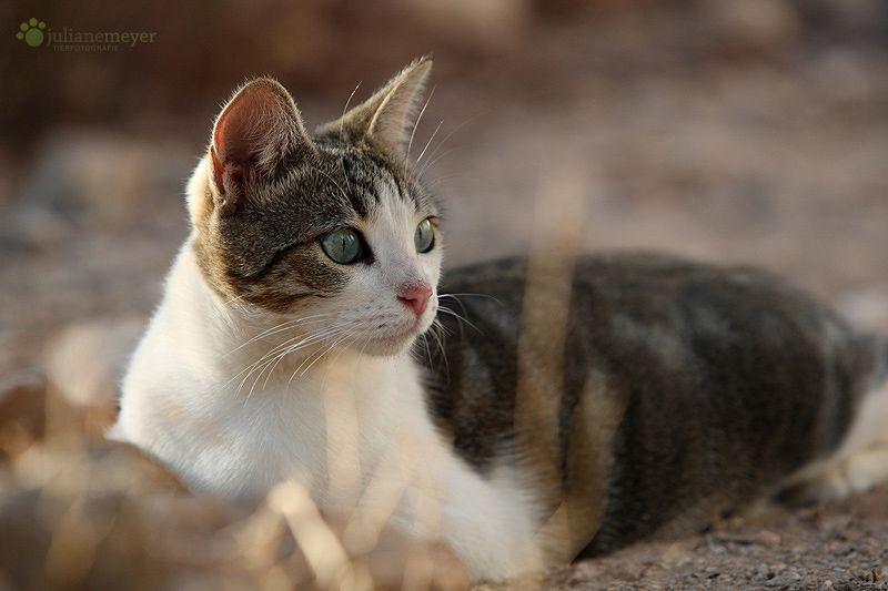 Some Photos Are Best Left Un Captioned Katzen Baby Katzen Babytiere