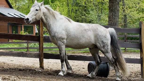 Why a Muddy Horse is Not a Happy Horse