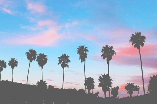 Happy Summer Hipster Palmtrees Colors Sun Beautiful