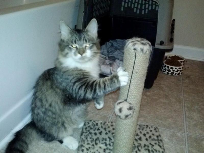 Pin On Help The Kitties