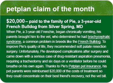I love Pet Plan...I have it for my pups...it came it great handy when my chihuahua needed knee sugery and I only paid $200 of  a $1600 bill :)