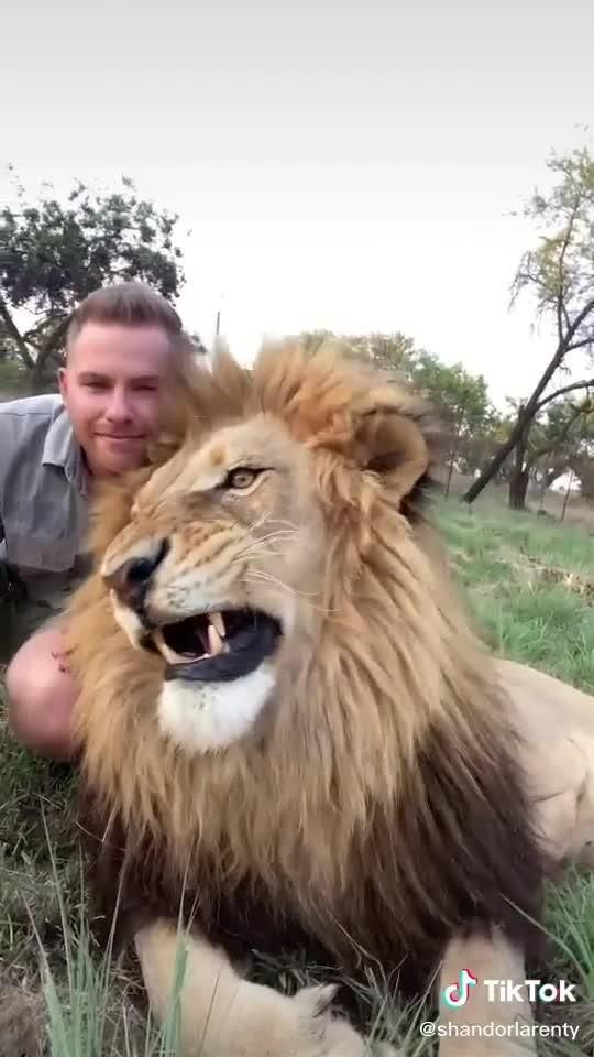 When they don't believe that your friend is a lion