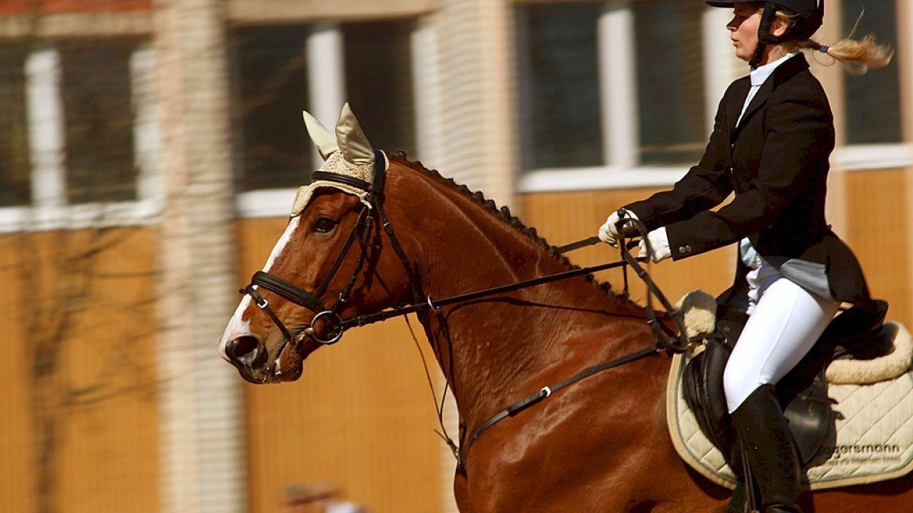 فوائد الرياضة للقلب Riding Helmets Equestrian Sports Equestrian