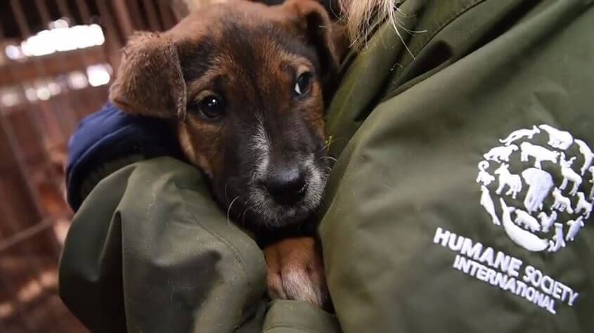 Humane Society International Saved 50 Dogs From A South Korean Dog Meat Farm Dieren