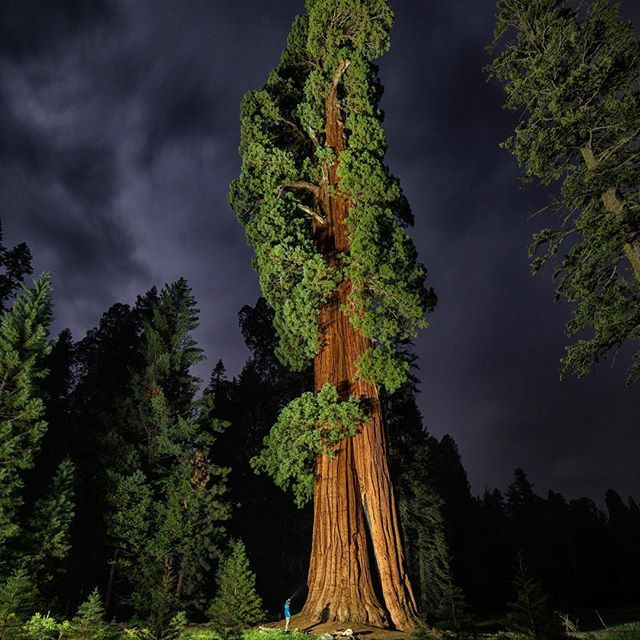 Photo @ladzinski / It's good to feel small from time to time and stepping foot into the #GiantForest of #sequoianationalpark, you certainly do. Sequoia trees are among the oldest living trees on earth, some living in excess of 3,000 years old. You don't get this old without being resilient. Sequoias are a very thirsty tree so to speak, requiring a lot of water. In recent decades heat index has been slowly on the on the rise, coupled with the drought in California, is making life at lower…
