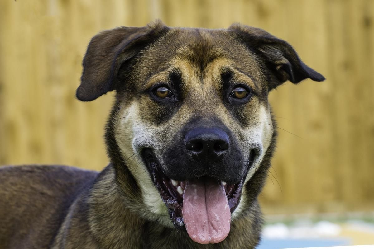 Sky Is An Adorable Young Dog Who Is Full Of Life Bouncy And Playful She Can Get Slightly Overwhelmed In New Situations But Gi Dogs Rescue Dogs Dog Adoption