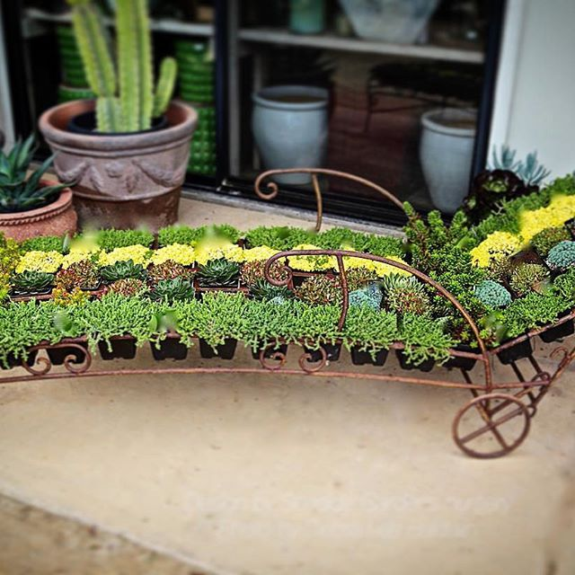 Succulent Chaise Made Of Sedums And Other Small Sux In 4 Inch Nursery Pots At Seaside Gardens Carpinteria Ca