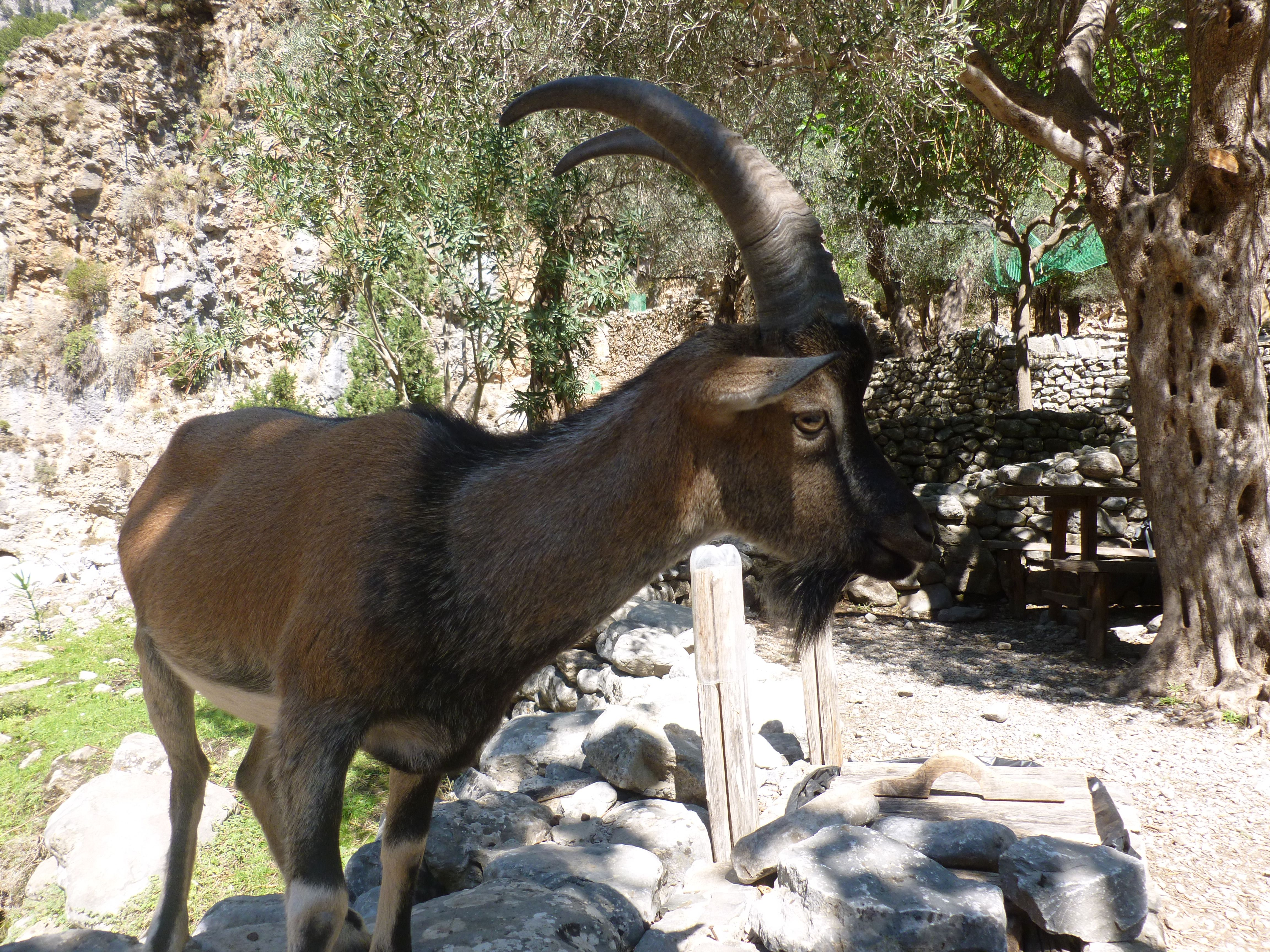 samaria kloof in Kreta