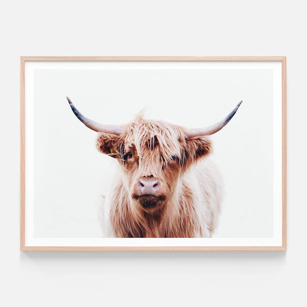 Duncan Highland Cow Framed Print Or Canvas Wall Art 41 Orchard Highland Cow Print Highland Cow Art Cow Wall Art