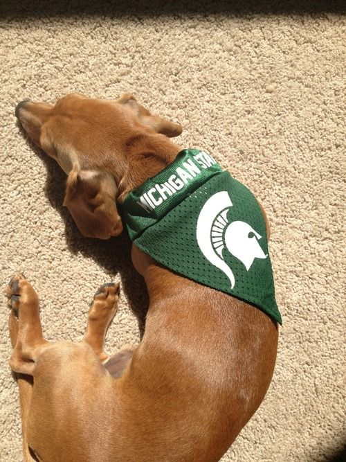 Michigan State Tumblr Michigan State Spartans