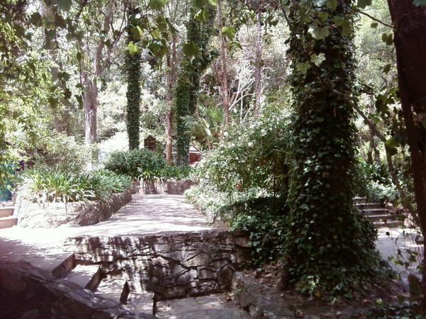 Parque Salus Minas Uruguay Google Search Uruguay Vacation Tree