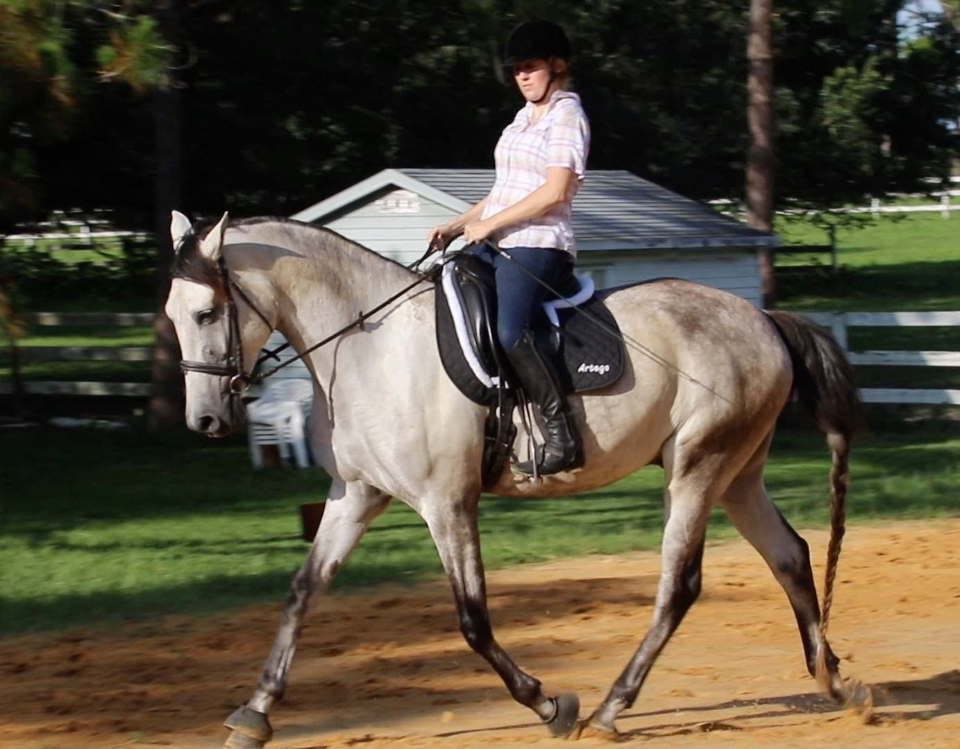 Pin by Pat Noon on Horse Geek in 2020   Horses, Animals