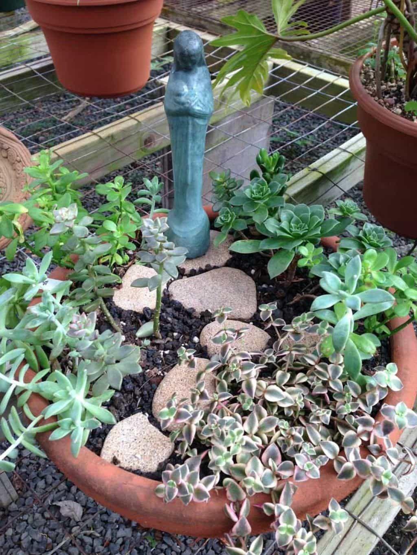 Caring Tips For A Dish Garden in 2020 Dish garden, Fairy