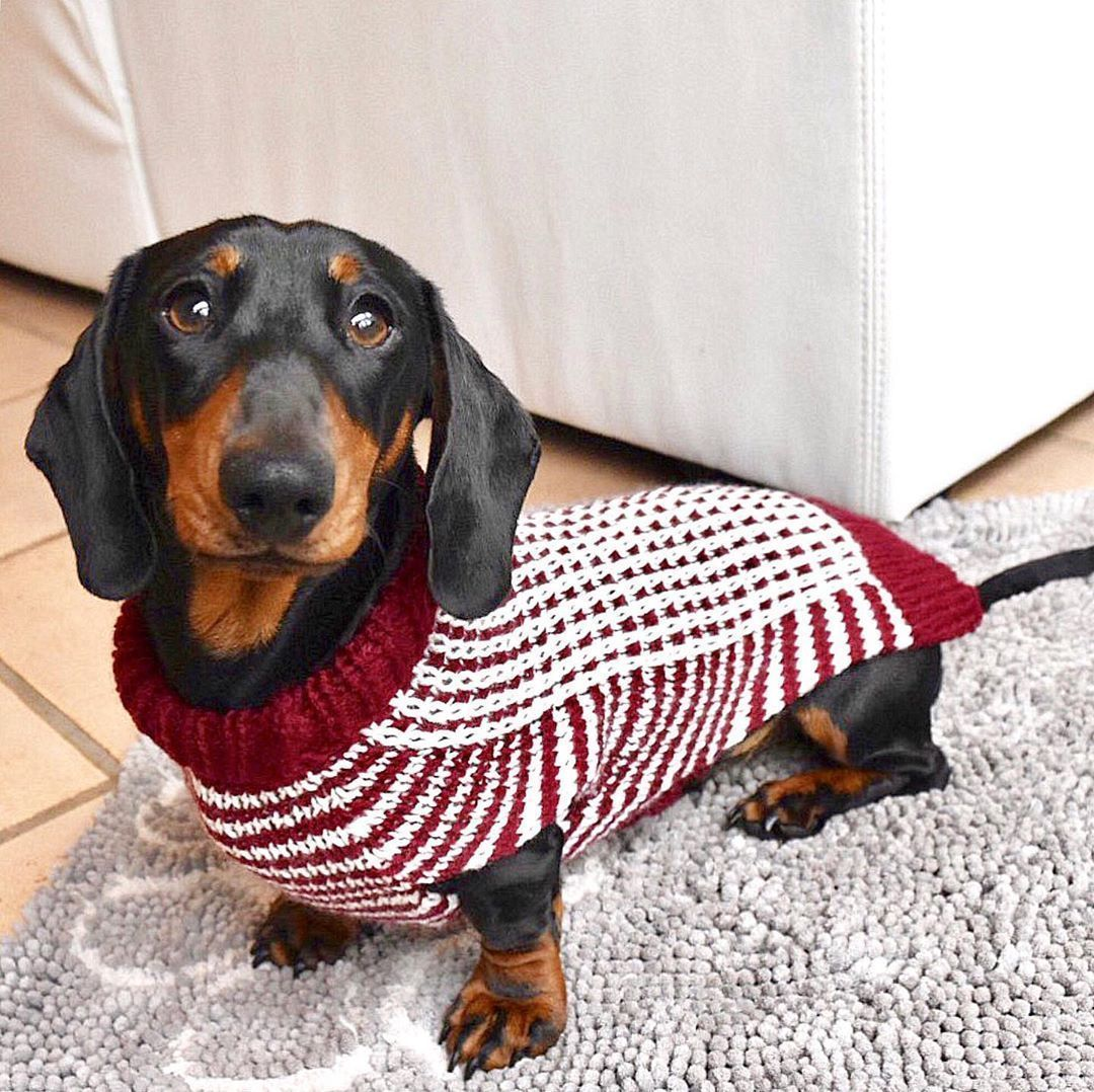 Cute Dachshund... If you love dachshunds, visit our blog