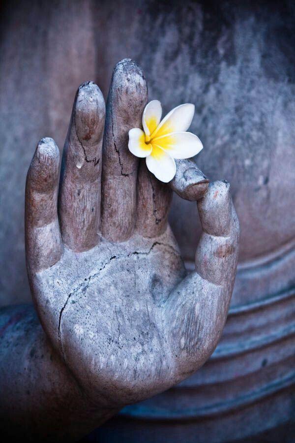 Buddha Hand With Frangipani Flower Buddha Zen