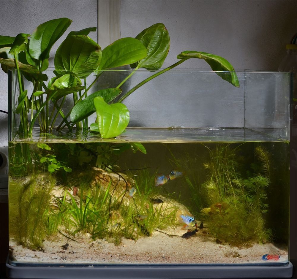 Home Aquarium Design Ideas: Biotope Aquarium Design Contest 2013. Quality Test Results