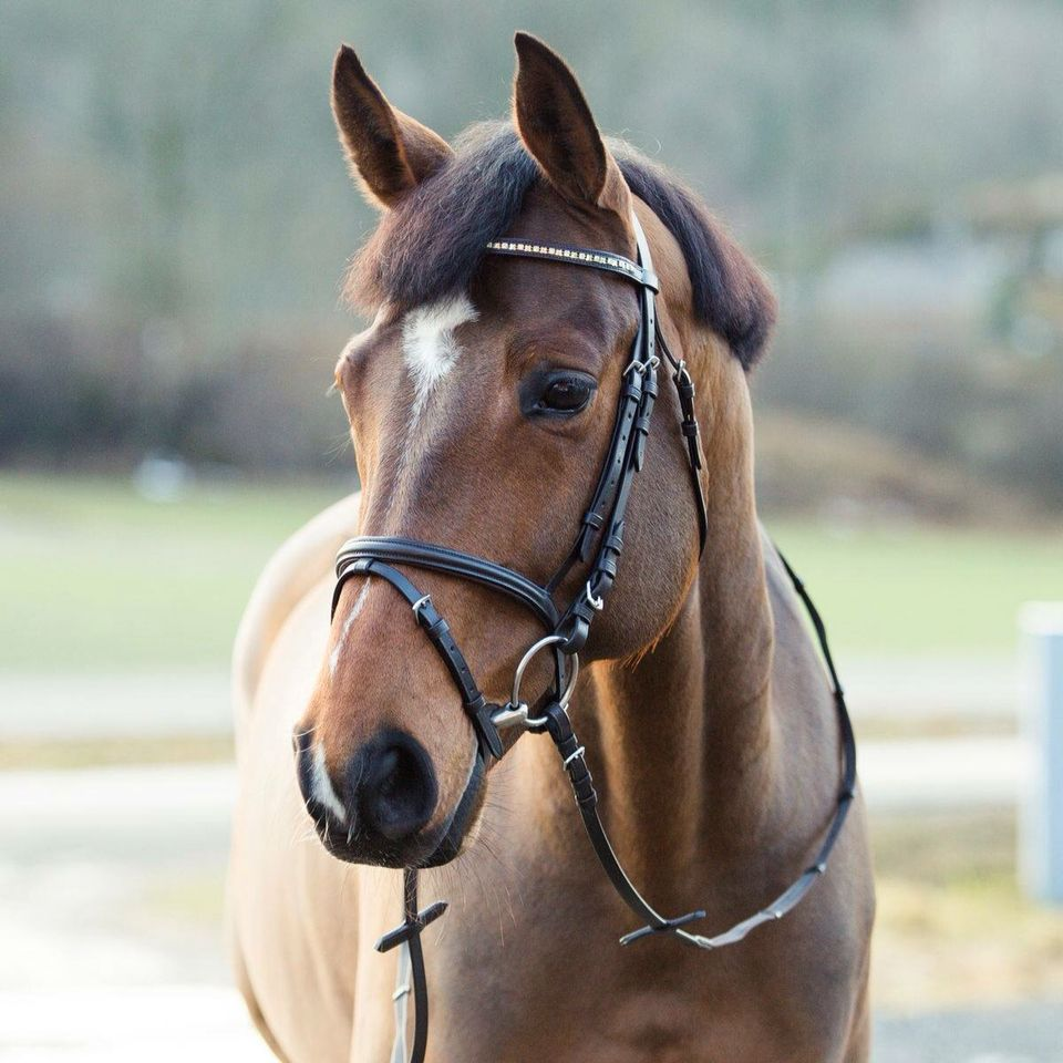 Horze Pony Bridle Cob Black//Gold