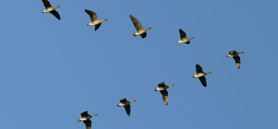 6 Steps For Ensuring Leadership Alignment Bird Migration Migratory Birds Birds