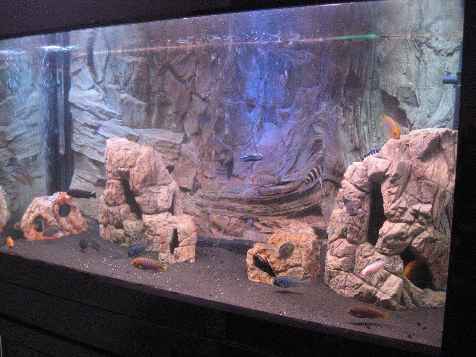 pin by lester dreher on fish tank ideas pinterest aquarium