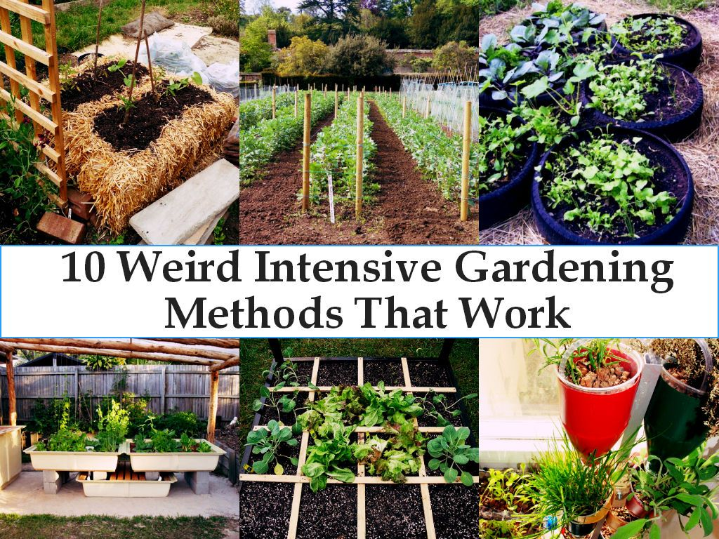 Intensive vegetable garden plans - Garden Care