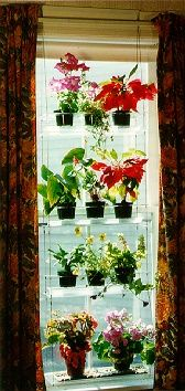 Indoor Window Gardening With Indoor Window Plant Hangers I Believe