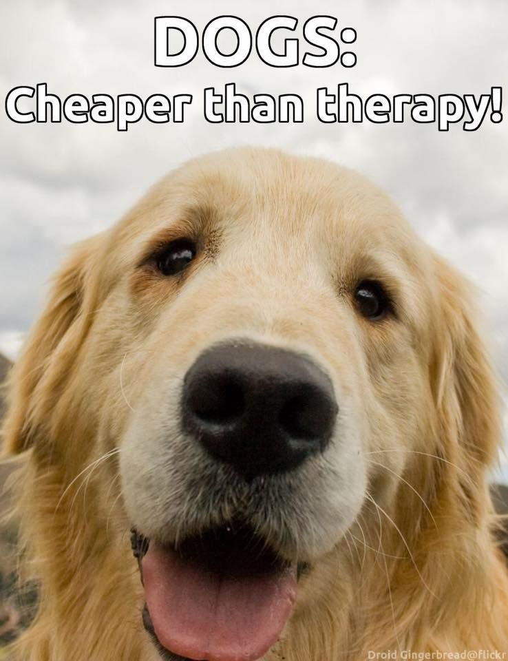 Dogs Cheaper Than Therapy Happy Dogs Dogs Dog Love