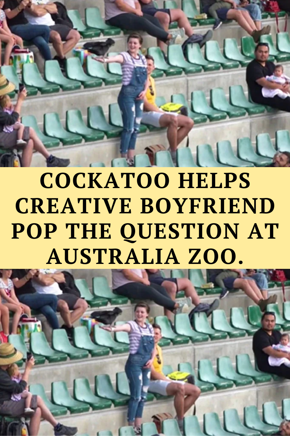 Cockatoo Helps Creative Boyfriend Pop The Question At Australia Zoo In 2021 Inspirational Short Stories Spotlight Stories Random Acts Of Kindness
