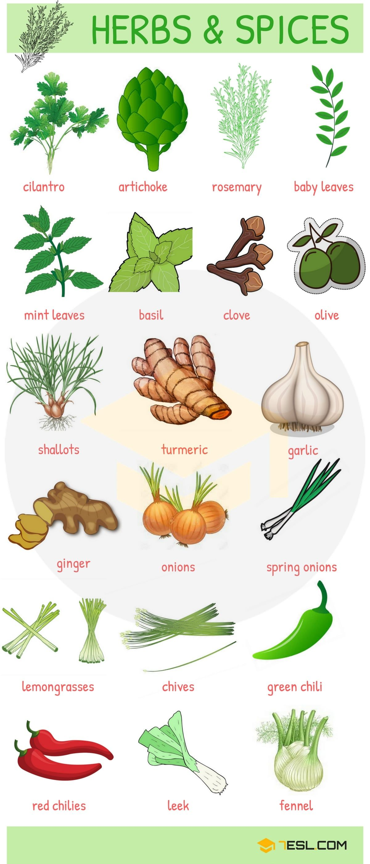 Fruits And Vegetables List English Names And Pictures 7 E S L English Vocabulary Name Of Vegetables Learn English Vocabulary