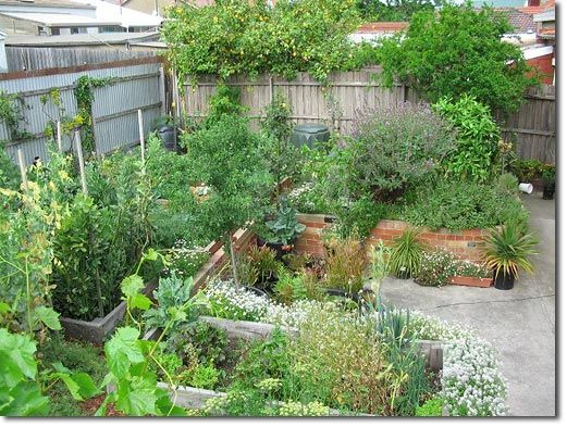Google Image Result For Http Www Permaculture Org Au Images Angelo Update1 003 Jpg Food Forest Garden Small Urban Garden Urban Garden