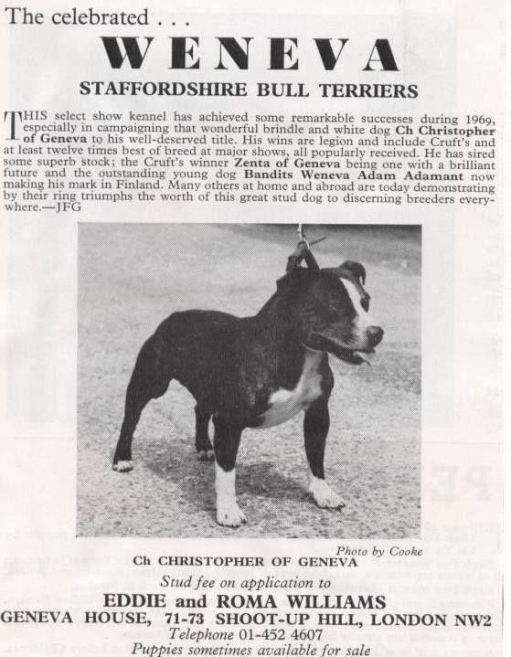 12 23 63 Pitbull Dog American Pitbull Terrier Pitbull Terrier