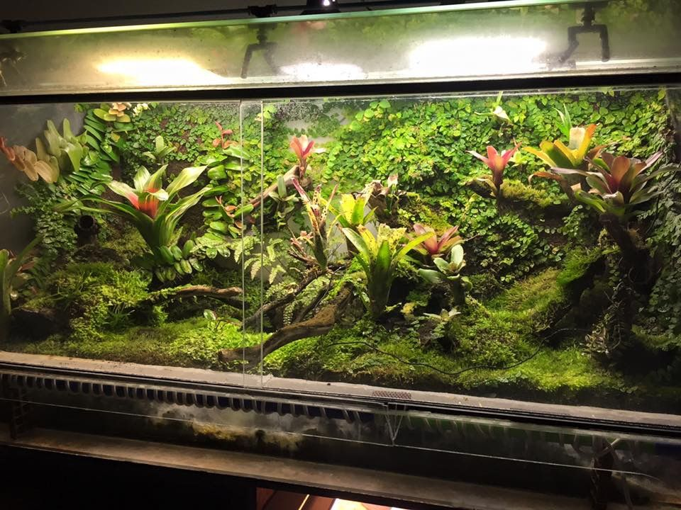 Vivarium, Terrariums, Aquascaping, Frogs, Aquariums, Poison Dart Frogs,  Darts, Terrarium, Plant Nursery