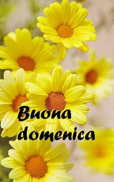 Fiori Gialli Yellow Flowers.Immagine Margherite Gialle Di Maria Su Giorni Fiori Gialli Fiori