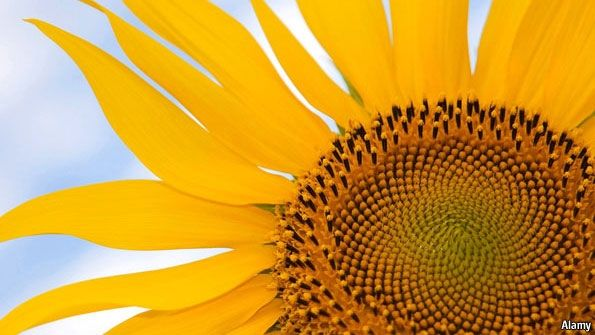 Flower Power Flower Power Sunflowers And Daisies Advantages Of Solar Energy