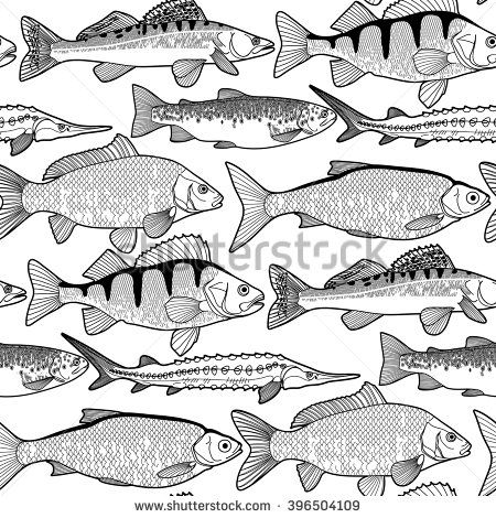 Freshwater Fish Coloring Pages. Graphic Freshwater Fish Seamless Pattern Sturgeon Roach Zander colouring  sheets