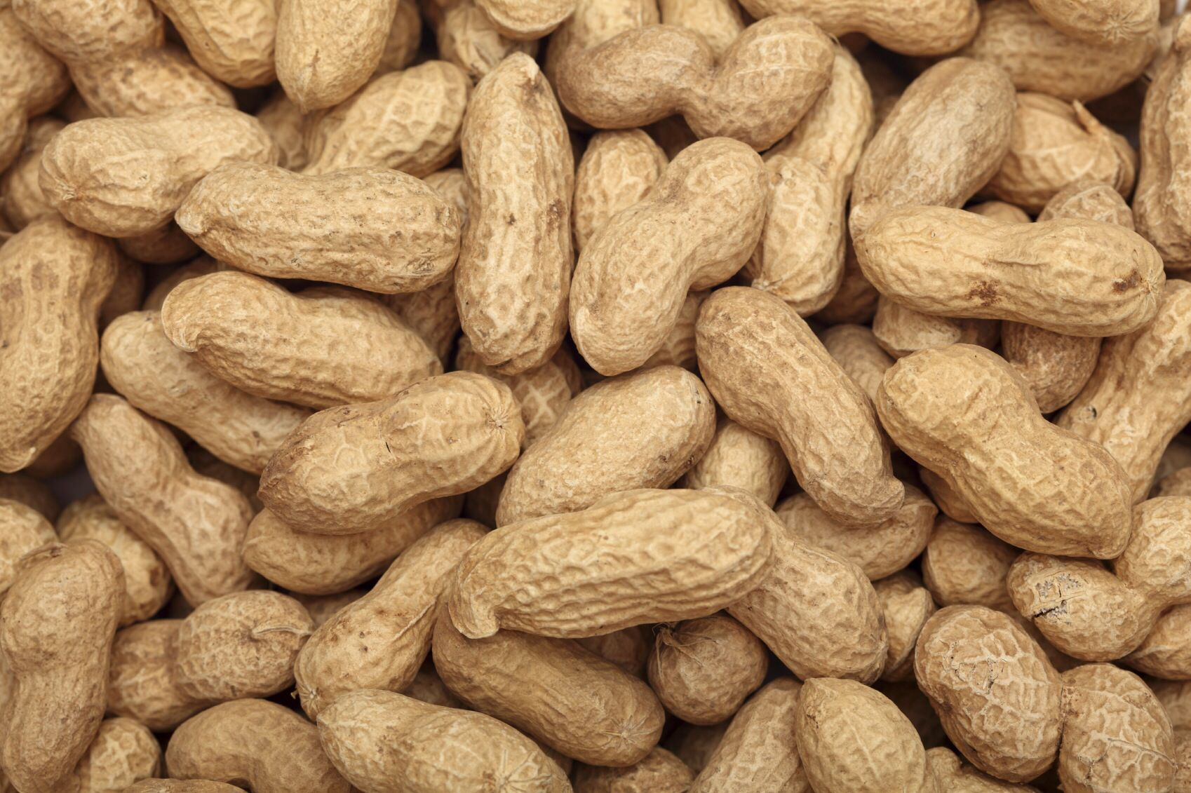 One third of all Wolof people grow peanuts  It is the main trading