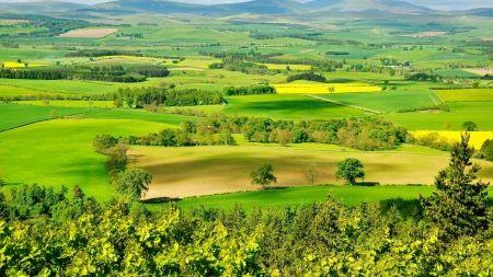 Landscape of Nature - firlld, beauty, green, landscape