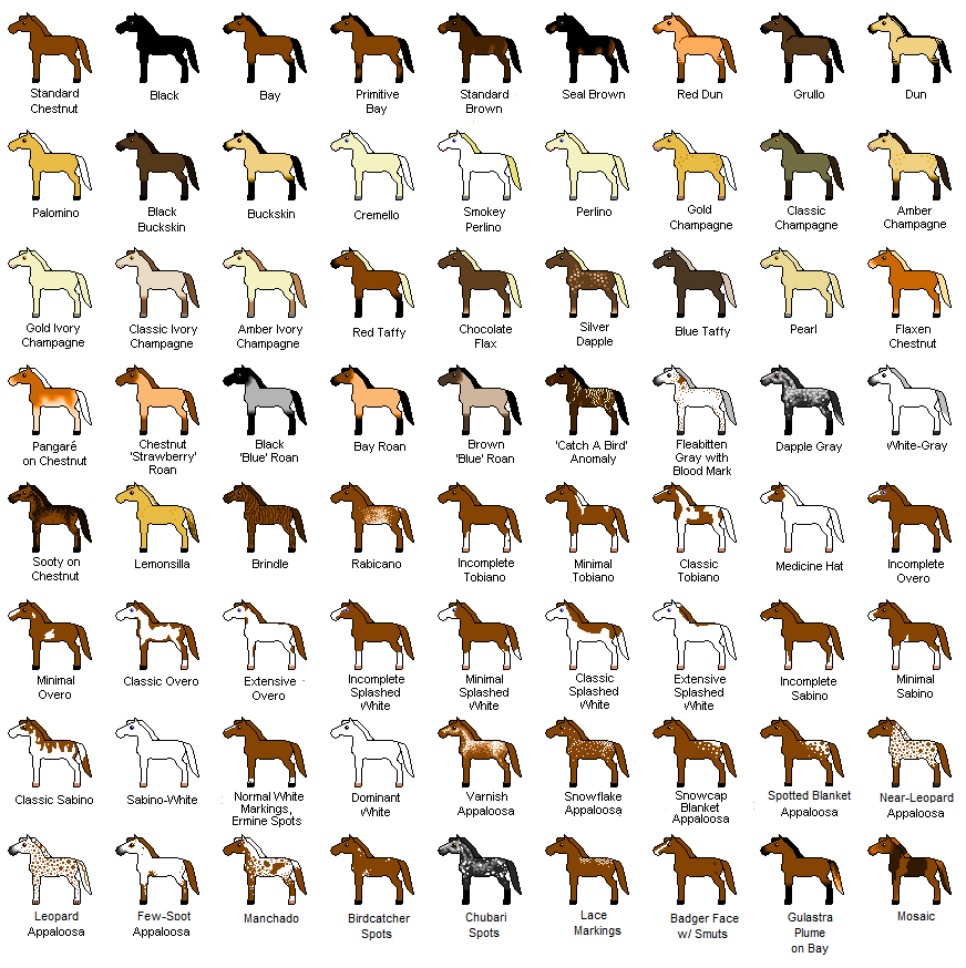 I Don T Know Where This Came From Originally But It S Kind Of Awesome Horse Color Chart Horse Breeds Horse Coloring