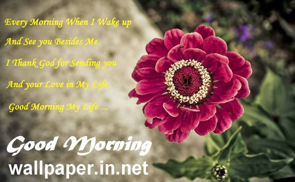 Just Follow The Wide Collection Of Good Morning 3d Wallpapers Free Download Choose The Best Wallpa Good Morning Wallpaper Morning Flowers Red Flower Wallpaper